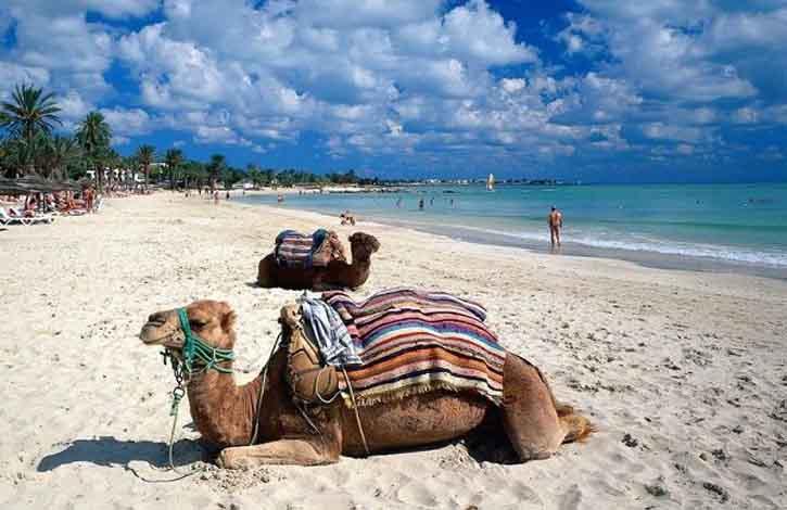 Kamele am Seguia Strand, Insel Djerba, Medenine, Tunesien
