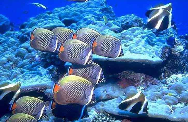 Мальдивы, Адду Атолл 4