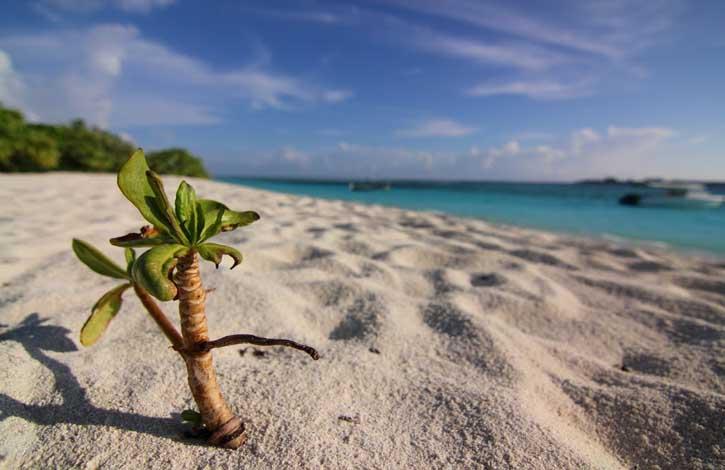 Мальдивы, Лааму Атолл 5