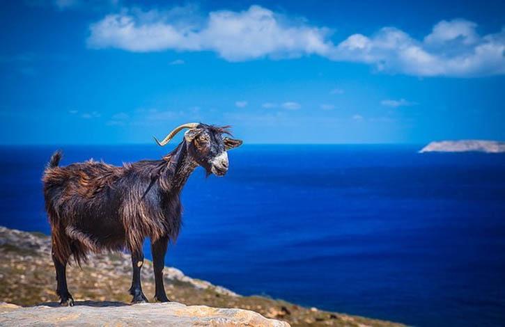 Раннее бронирование туров на о. Крит